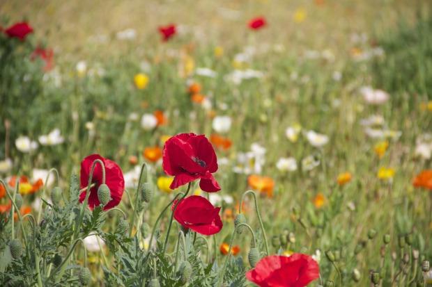 floral-199099_1920